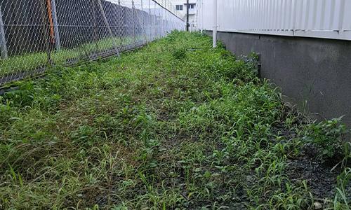 県内4拠点 企業様敷地内の除草・植栽剪定01