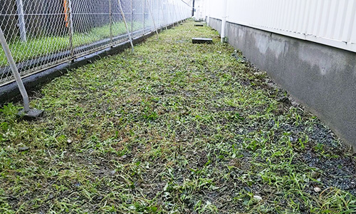 県内4拠点 企業様敷地内の除草・植栽剪定02