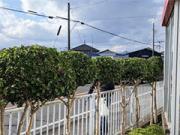 袋井市・富士市 企業様敷地内の除草・植栽剪定